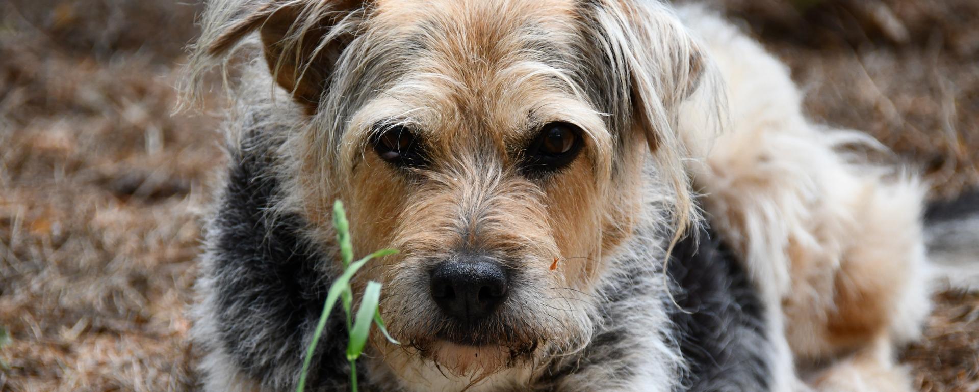 szkolenia nieposłusznych psów Warszawa