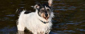 szkolenie trudnych psów warszawa
