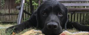 indywidualne szkolenia dla psów we własnym domu
