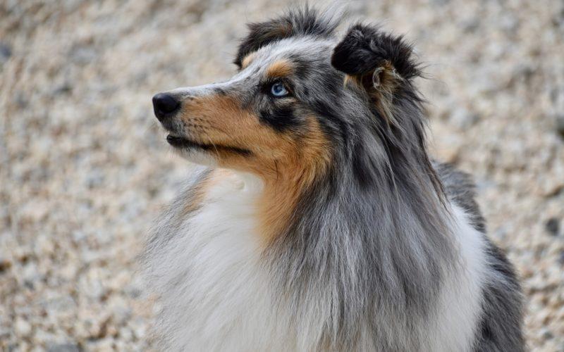 szkolenia dla psów warszawa wiązowna