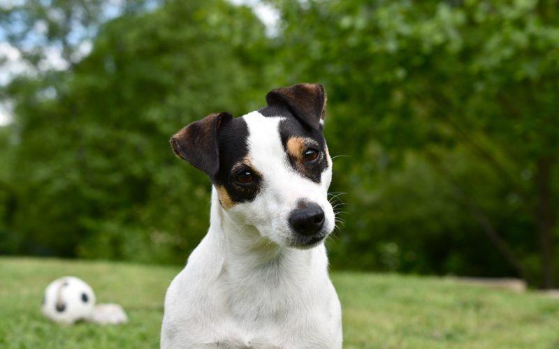 hotel dla psów warszawa wiązowna, noclegi dla psów warszawa wiązowna, tymczasowa opieka nad psem warszawa wiązowna
