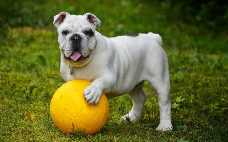 konsultacje indywidualne dla psów warszawa, spotkania indywidualne warszawa, szkolenia indywidualne psów warszawa wiązowna