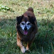 konsultacje indywidualne tresowanie psow