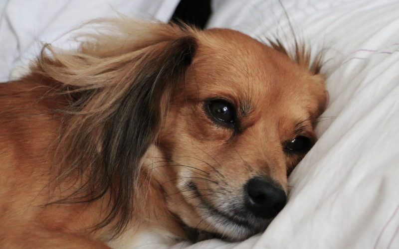 szkolenia szczeniaków warszawa, szkolenia młodych psów warszawa, tresura szczeniaków warszawa