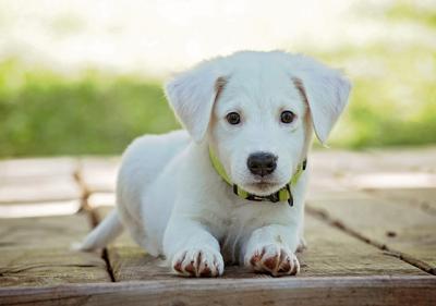 szkolenia dla szczeniakow warszawa