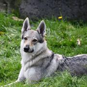 szkolenie doroslych psow warszawa