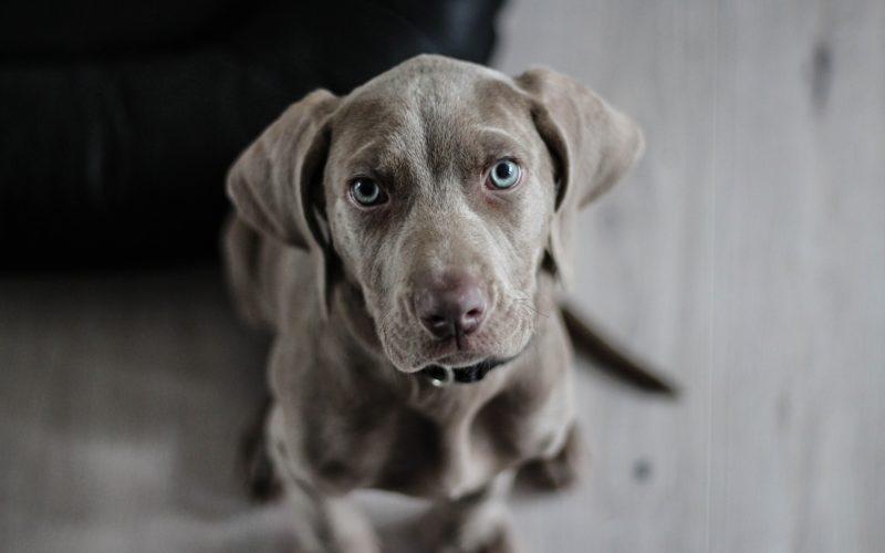 szkolenia dla psów warszawa wiązowna, tresowanie psów warszawa, zajęcia dla psów warszawa